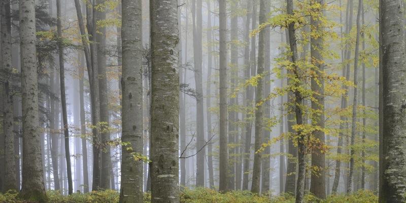 Wald 015